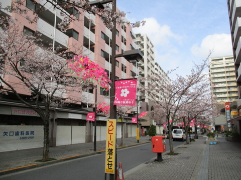 05千本桜通り商店会2