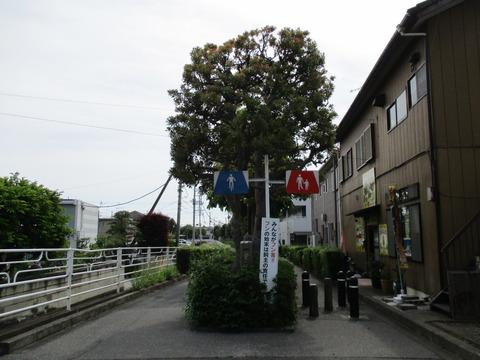 14つばき橋5