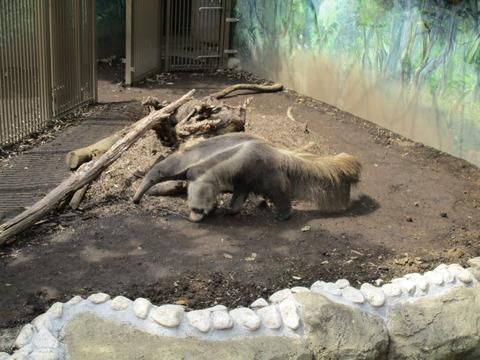 79自然動物園4