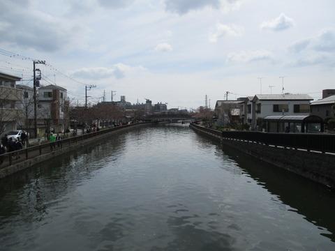 33新川千本桜6
