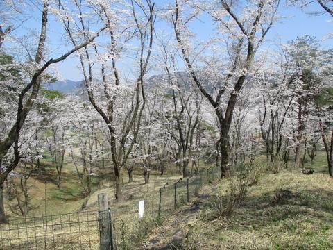 153野土山4