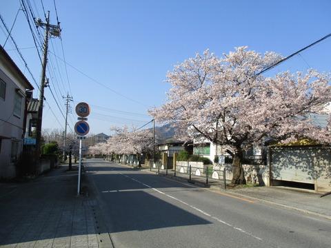 32北桜通り1