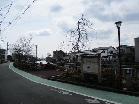 28新川千本桜1