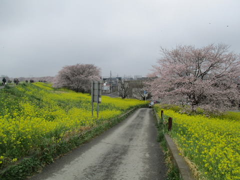 111熊谷桜堤17