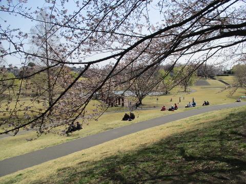 90桜並木3