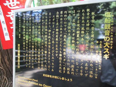 123大杉2