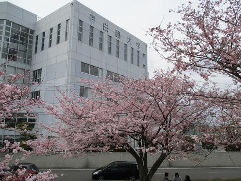 172白鷗大学東側11
