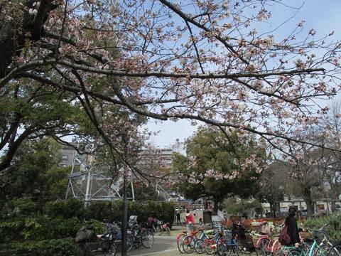 53宇喜田さくら公園4