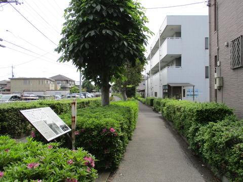 15つばき橋6
