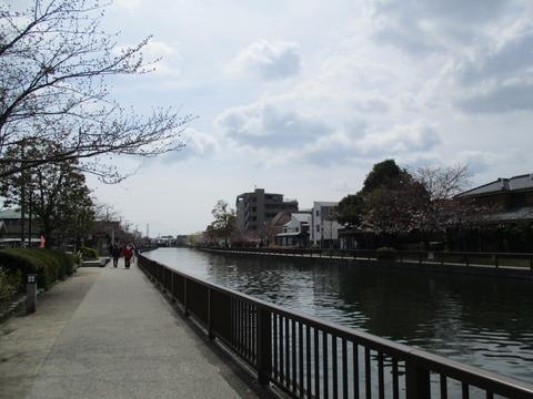 30新川千本桜3