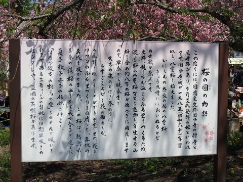 69滝桜2