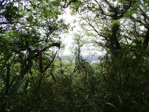 114木と眺望4