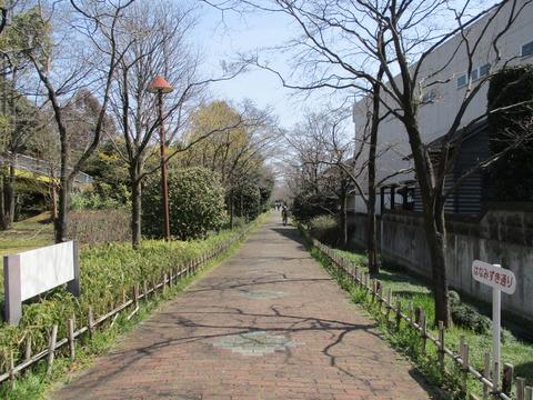 61ハナミズキの並木道1