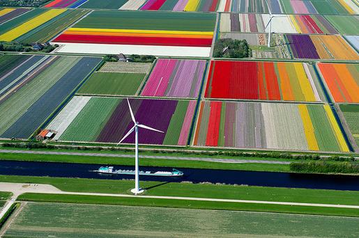 tulip-fields-aerial-view-normann-szkop-1