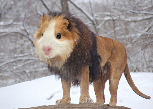 photoshopped-animals-gyyp-6