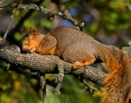 tiredanimals11