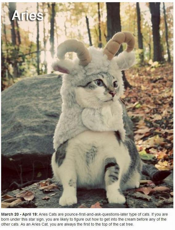 cats_zodiac_01