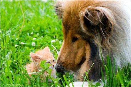 when_kitten_meets_dog_06