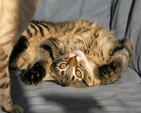 Cute-Upside-Down-Cat-Caturday