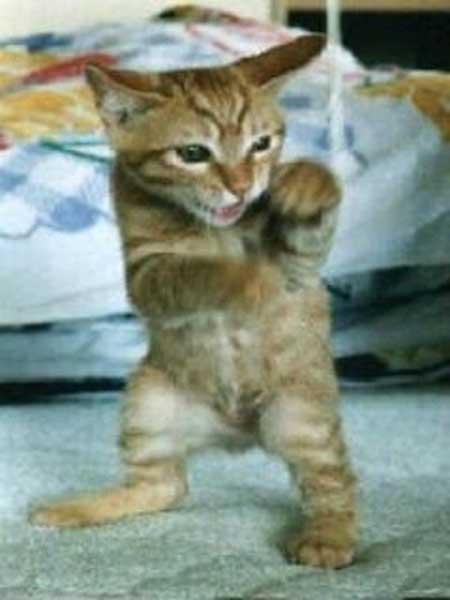 ファイティング猫