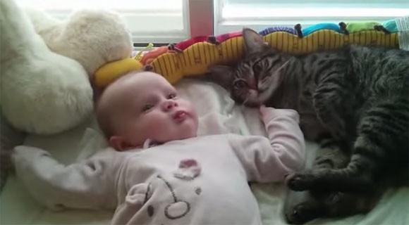 赤子の面倒をみていた猫のこの後すぐ!