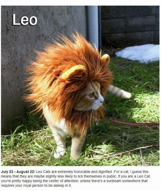 cats_zodiac_05