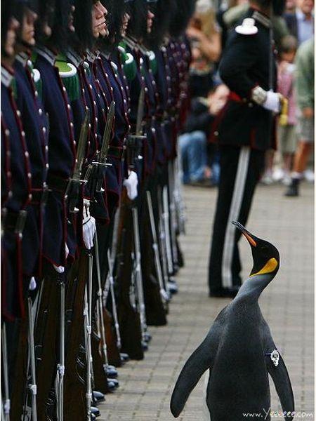 crazy_military_parades_21