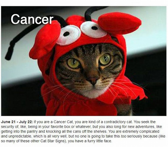 cats_zodiac_04