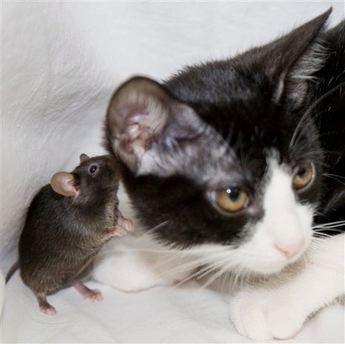 cat-&-mouse-9