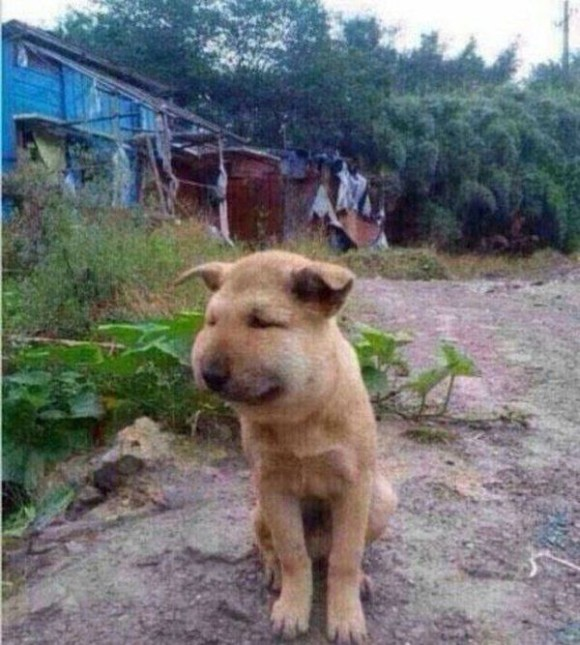 dog_03_e