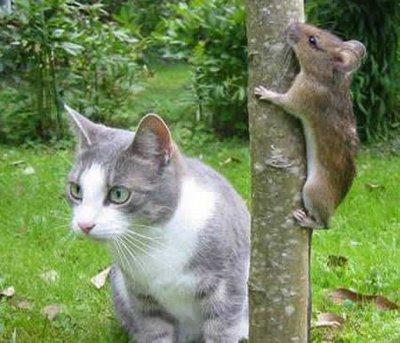 cat-&-mouse-7