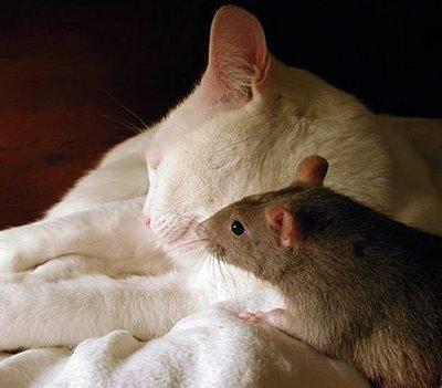 cat-&-mouse-2
