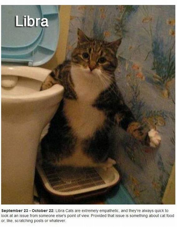 cats_zodiac_07