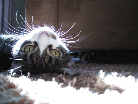 Sunlight-Cat-Upside-Down-Caturday