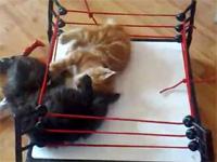 猫プロレス