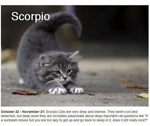 cats_zodiac_08