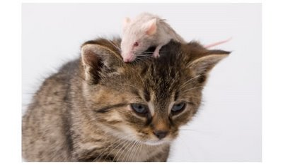 cat-&-mouse-8