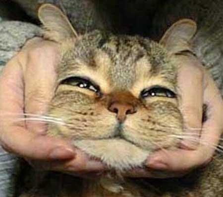 あっかんべー猫