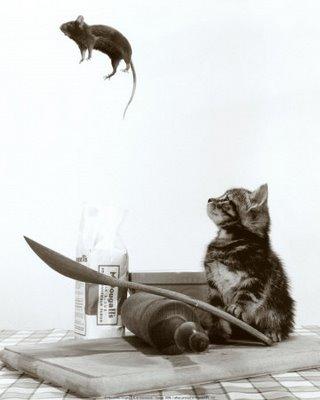 cat-&-mouse-12