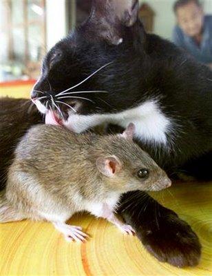 cat-&-mouse-6