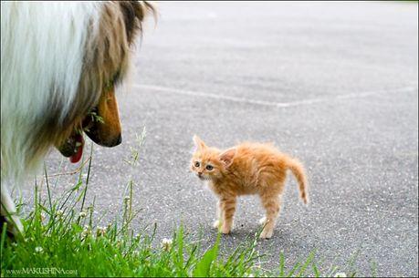 when_kitten_meets_dog_03