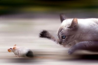 cat-&-mouse-13