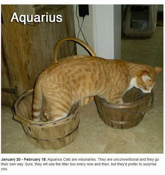 cats_zodiac_11