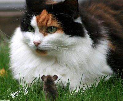 cat-&-mouse-10