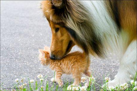 when_kitten_meets_dog_05