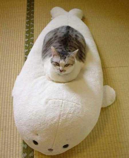いるかに乗った猫