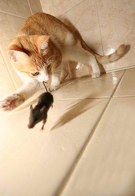 cat-&-mouse-1