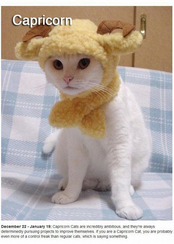 cats_zodiac_10