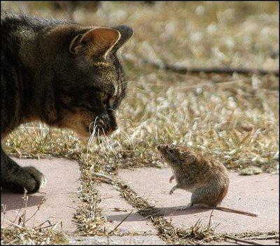 cat-&-mouse-5