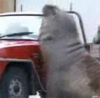 象アザラシ